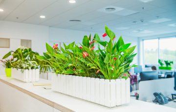 Dlaczego warto zdecydować się na kwiaty i rośliny do biura?